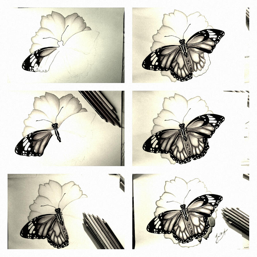 butterfly on the flower drawing step by step ii by inesartist on