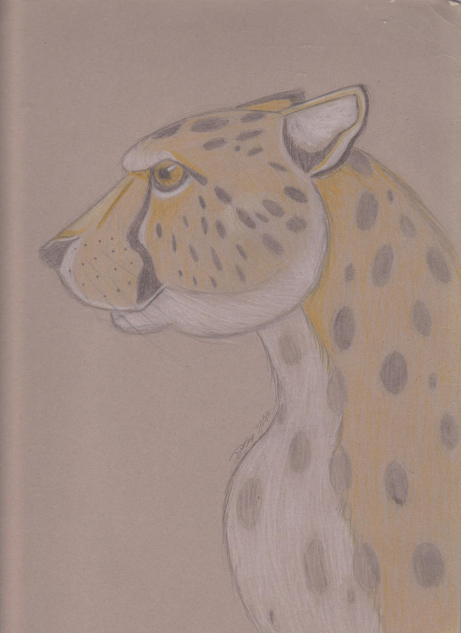Cheetah by JaDebuscus