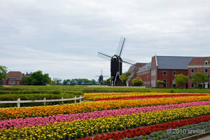 Holland in Japan by allim7905