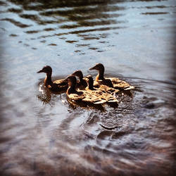 Ducks On The Lake by TailsThePrower71