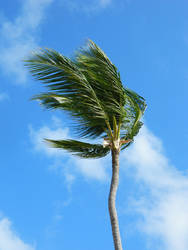 The Lonely Palm Tree