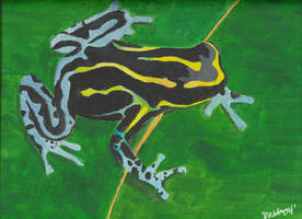 Dendrobates ventrimaculatus by omisgirl