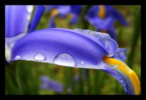 Violet's spring by ViOLeTjaniS