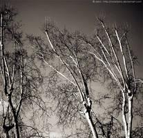 Trees by ViOLeTjaniS
