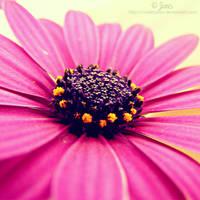 Purple inside by ViOLeTjaniS