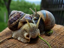 Snail love by SyllAndy