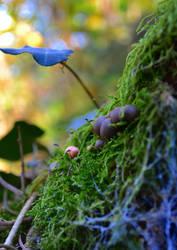 BBy Mushrooms by SyllAndy
