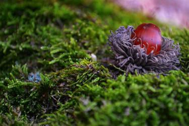 Forest treasure by SyllAndy