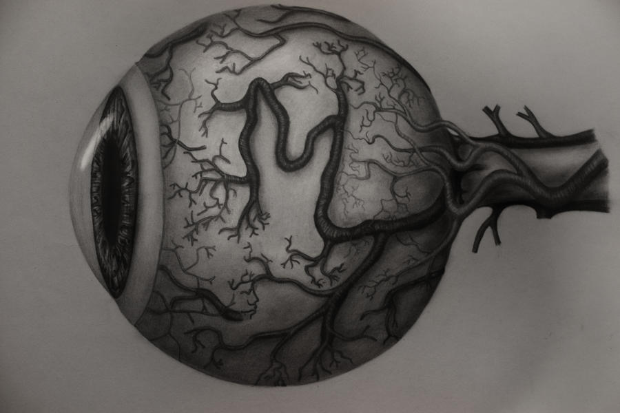 The Eye Anatomy by ArtOfNightSky on DeviantArt