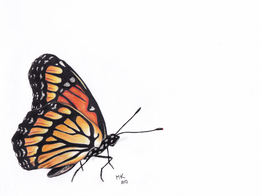 Colored pencil - Butterfly by ArtOfNightSky on DeviantArt
