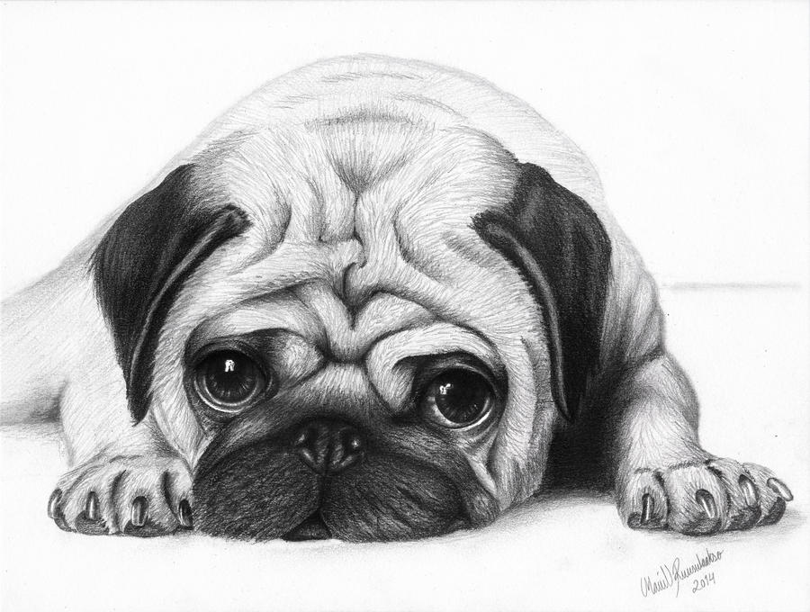 Puppy face - Pug by ArtOfNightSky