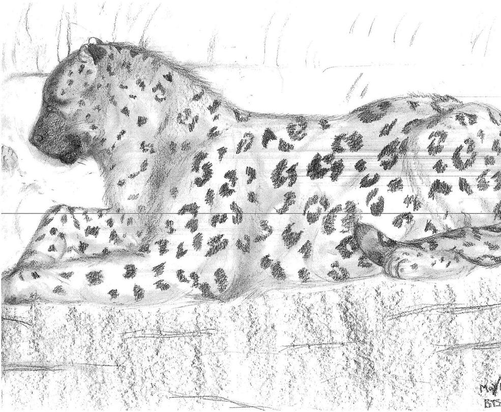 Amur Leopard by AltaikaTau