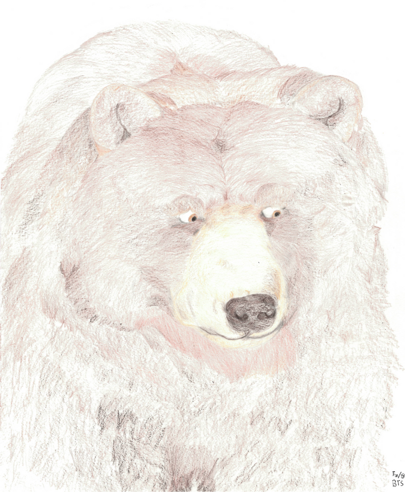 Grizzly Bear by AltaikaTau