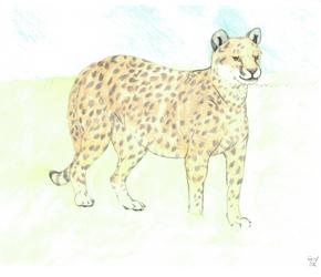 Cheetah by AltaikaTau