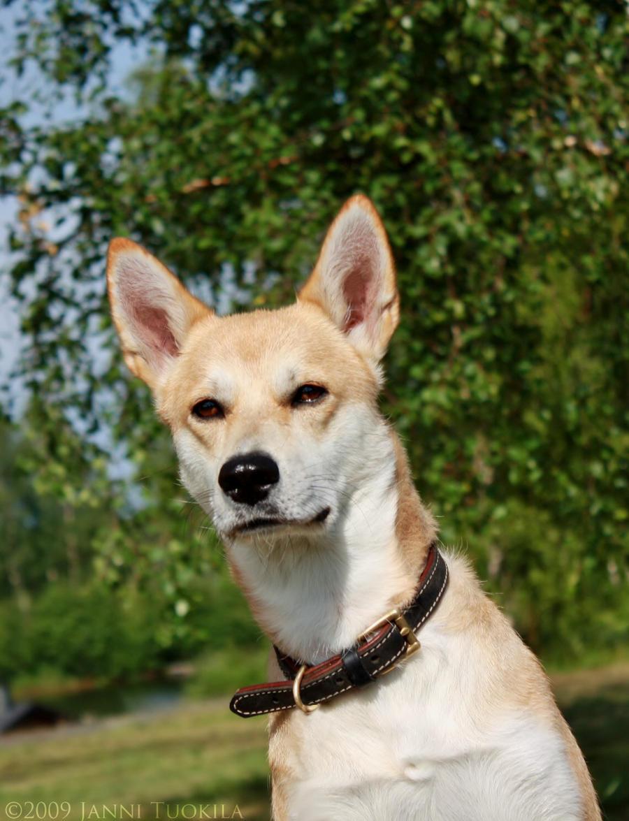Very Small Dog Mixed Breed Uk