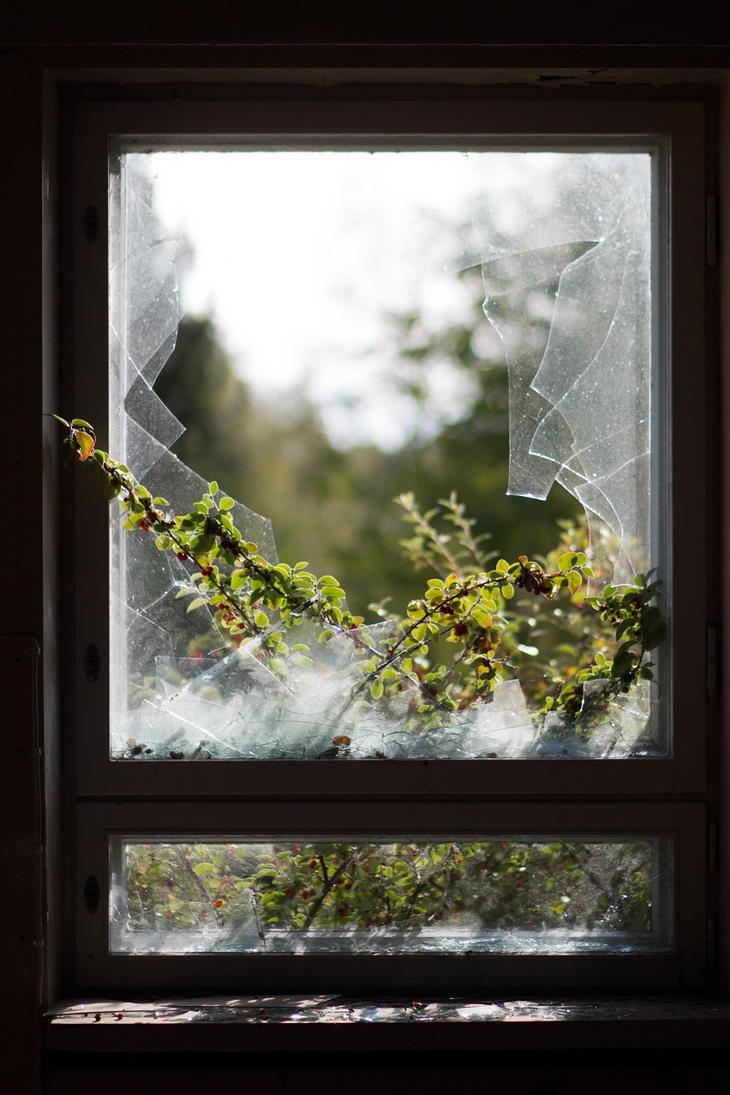 Window by Jansu95