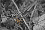 Spider by Stevoa5