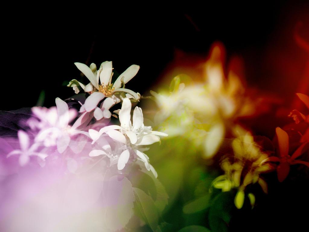 Looking Through Flowers by infinityloop