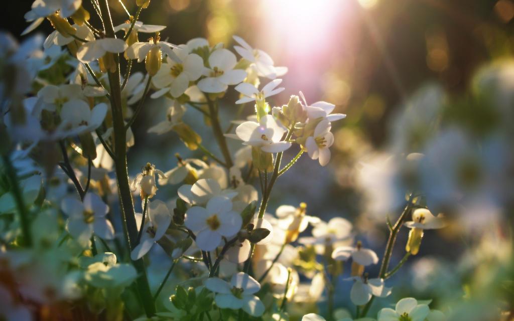 Springtime flowers by infinityloop