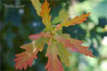 Plants by ischarm