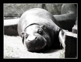 Hippo by ischarm