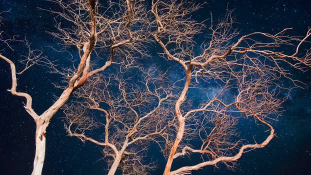 Branches Of The Universe