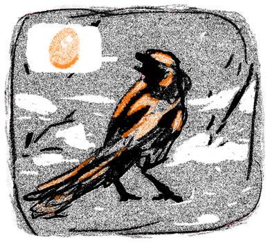 Neufundland research bird