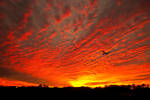 Through the Sunset
