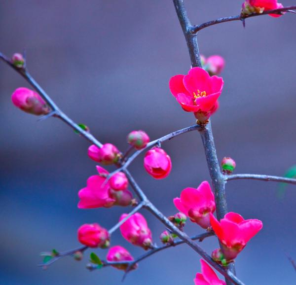 Springtime lll by deseonocturno