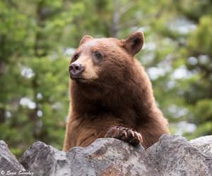 Bear by deseonocturno