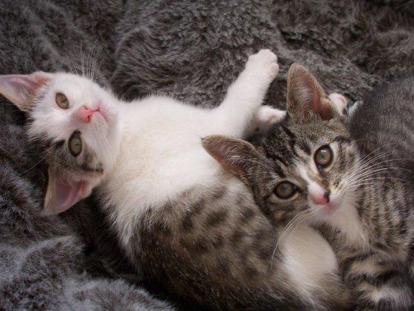Cute kittens by bananarama96