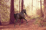 Your Horse Here | open - reduced