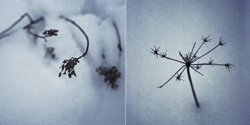 Earth in Forgetful Snow by graviloquence