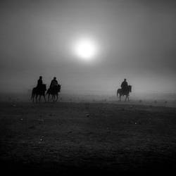 gang of horses. by nrprtm