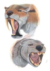 Thylacosmilus atrox and Thylacoleo carnifex