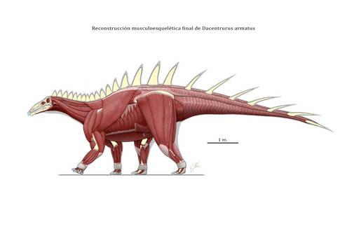 Dacentrurus armatus muscle reconstruction