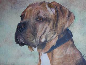 Dog by Rebeltje