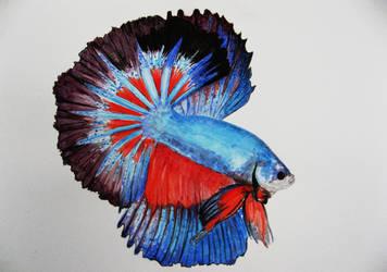Betta fish 1 by GhyselenBert