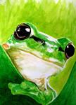 Frog by GhyselenBert