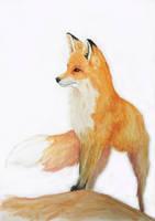 Fox by GhyselenBert
