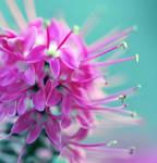 snippy floret
