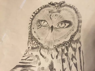 Owl by TheZombieQueen23