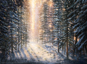 Snow-Covered Forest from Magic: The Gathering