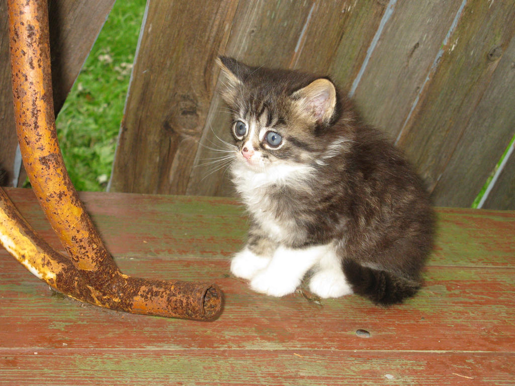 Kitty :3 by SirElliot24