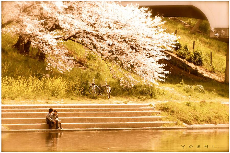 spring love by jyoujo