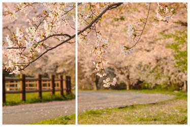 spring circles by jyoujo