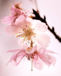 pink by jyoujo