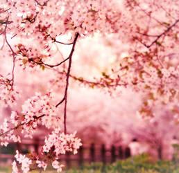 sweet piece of youth - sakura