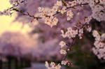 5 centimeters per second by jyoujo