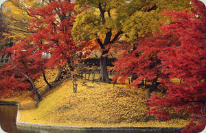 changing seasons by jyoujo